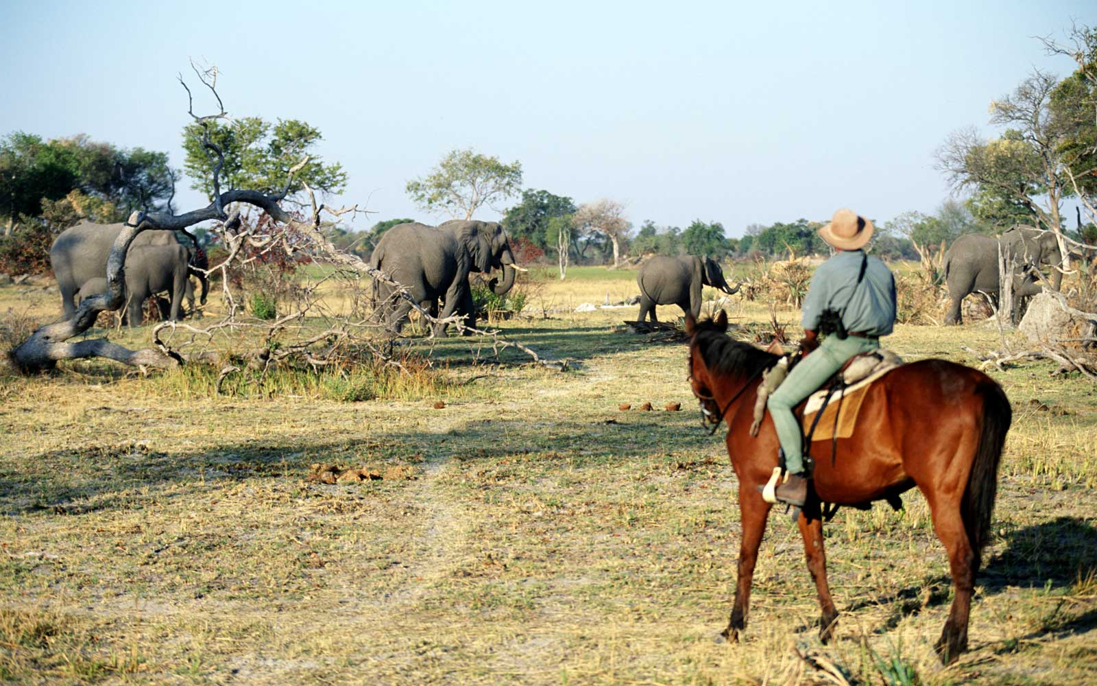 Go on a Horseback Riding Safari in Botswana