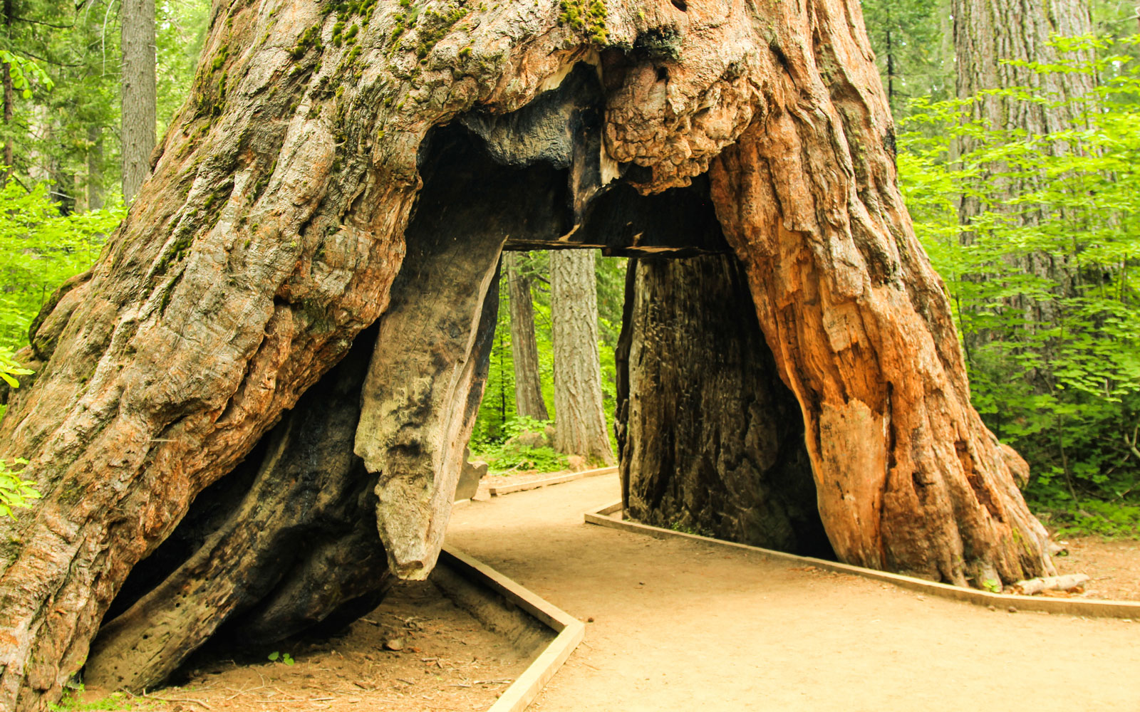 An iconic tree in California was taken out by a storm.
