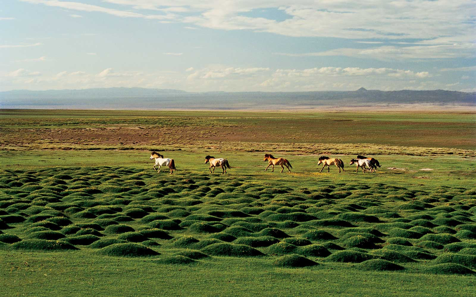 Trek Through Rural Mongolia