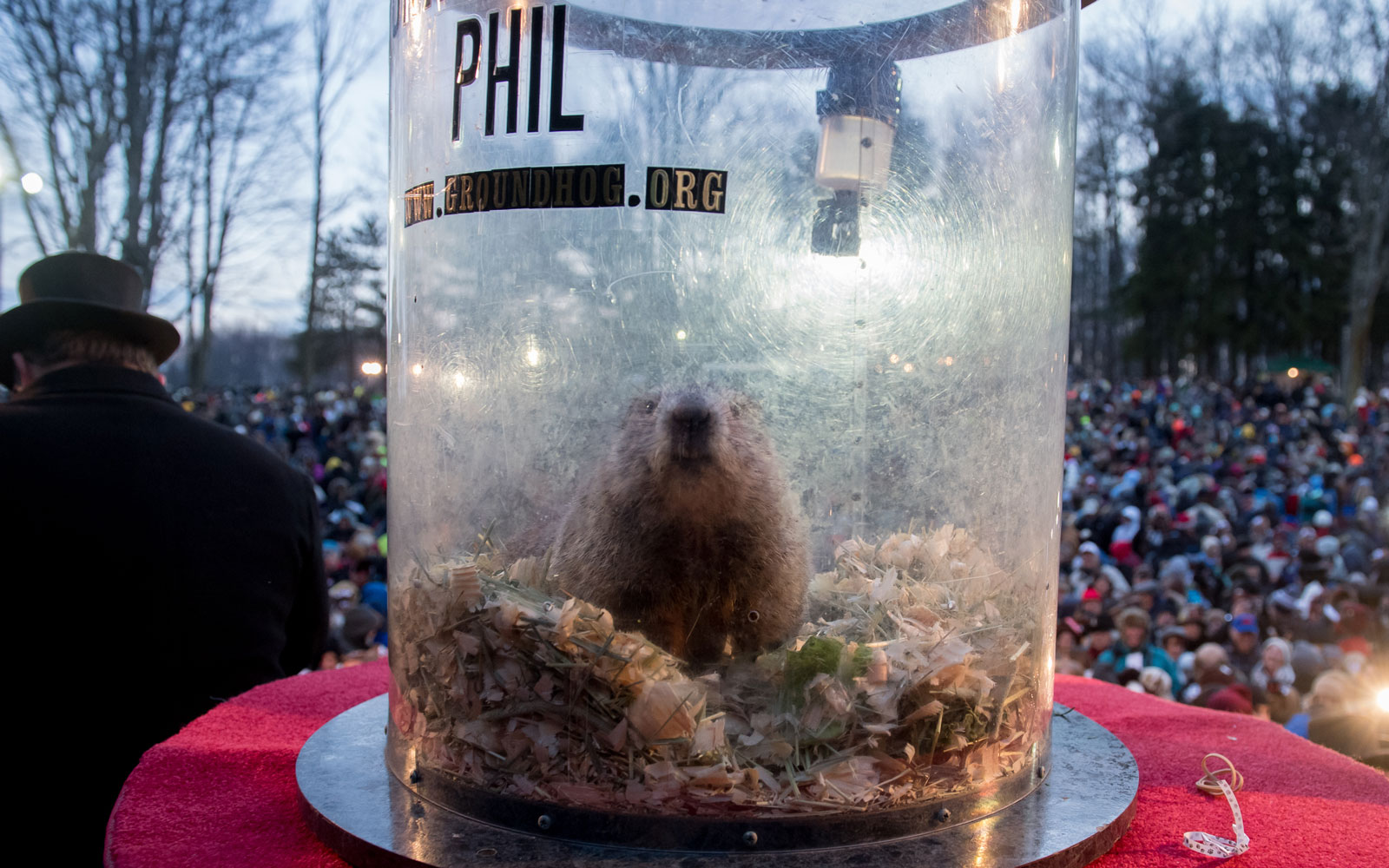 Phil, in Punxsutawney on Feb. 2, 2017.
