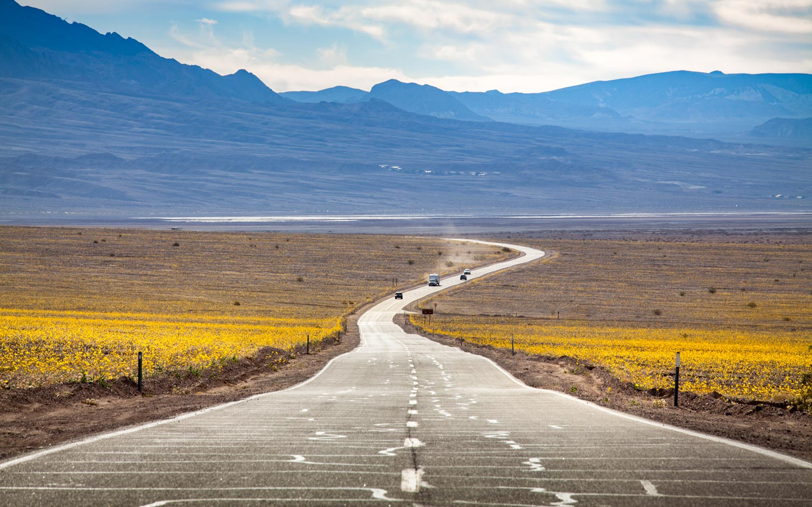 Highway 190, Death Valley, National Park, Wildflowers, Super Bloom, Spring 2016