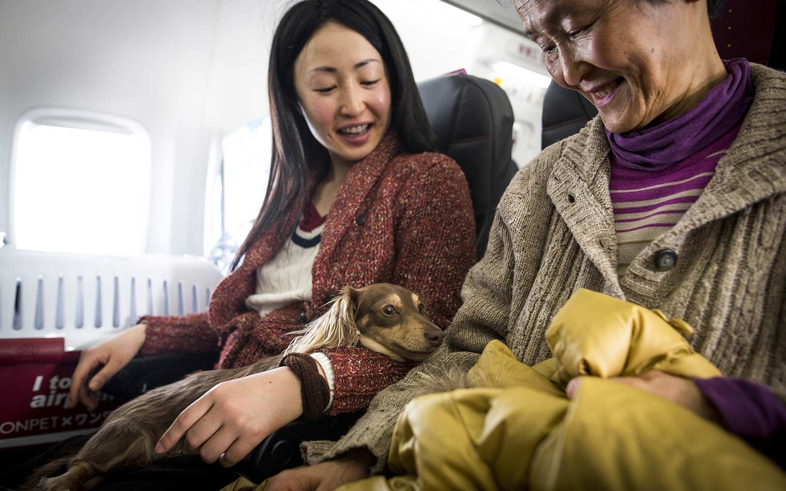 Dog friendly flights with dogs Japan