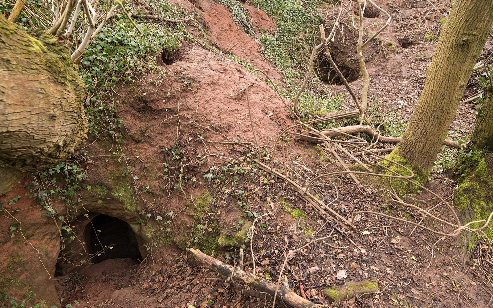 Rabbit hole to knight caves
