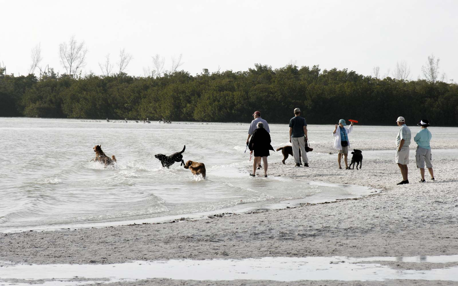 Dog Beach: Fort Myers Beach, Florida