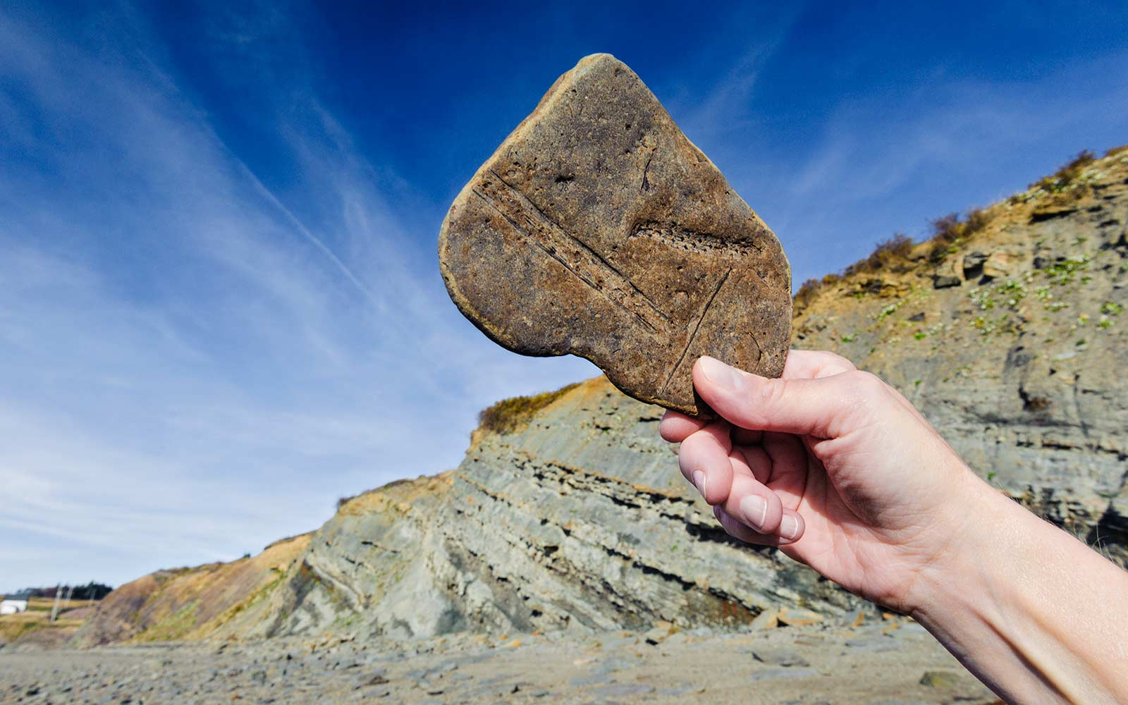 Joggins Fossil Cliffs by the Bay of Fundy tides. Nova  Scotia, Canada. World Heritage Site.