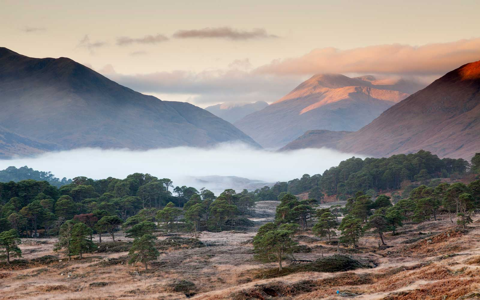 Low autumn mist at dawn in Glen Affric, Highlands, Scotland.