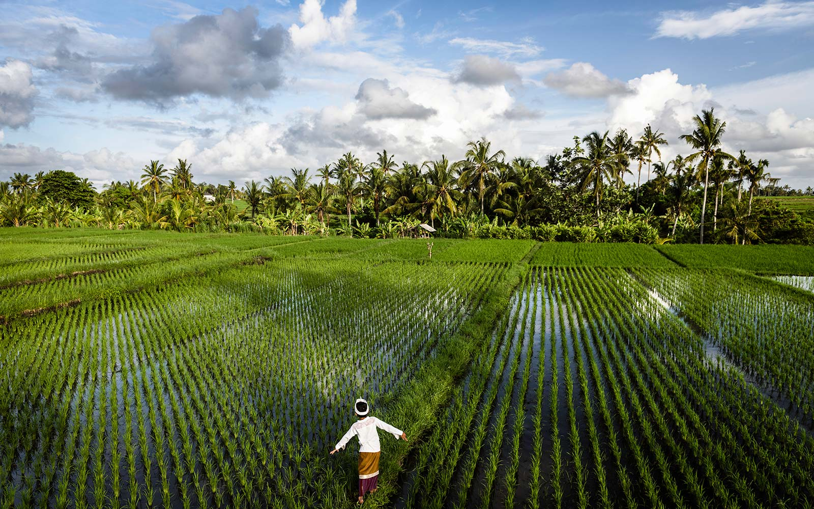 Bali Indonesia rice paddy fields