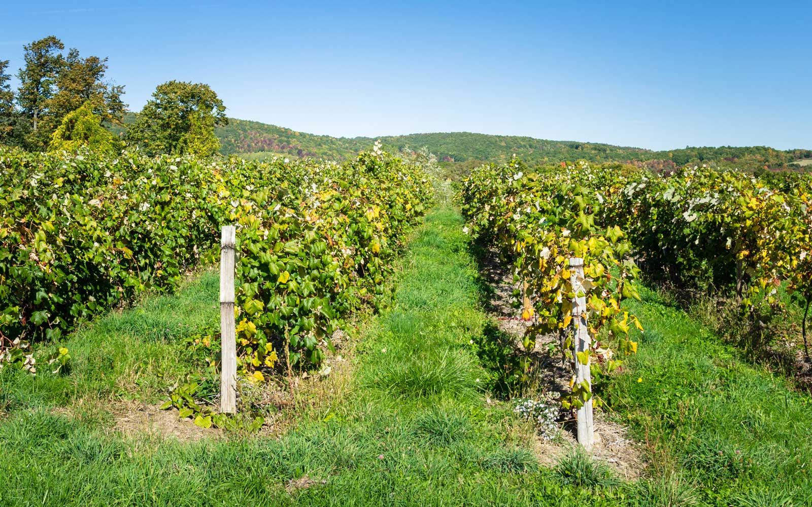 Finger Lakes Wine Regions