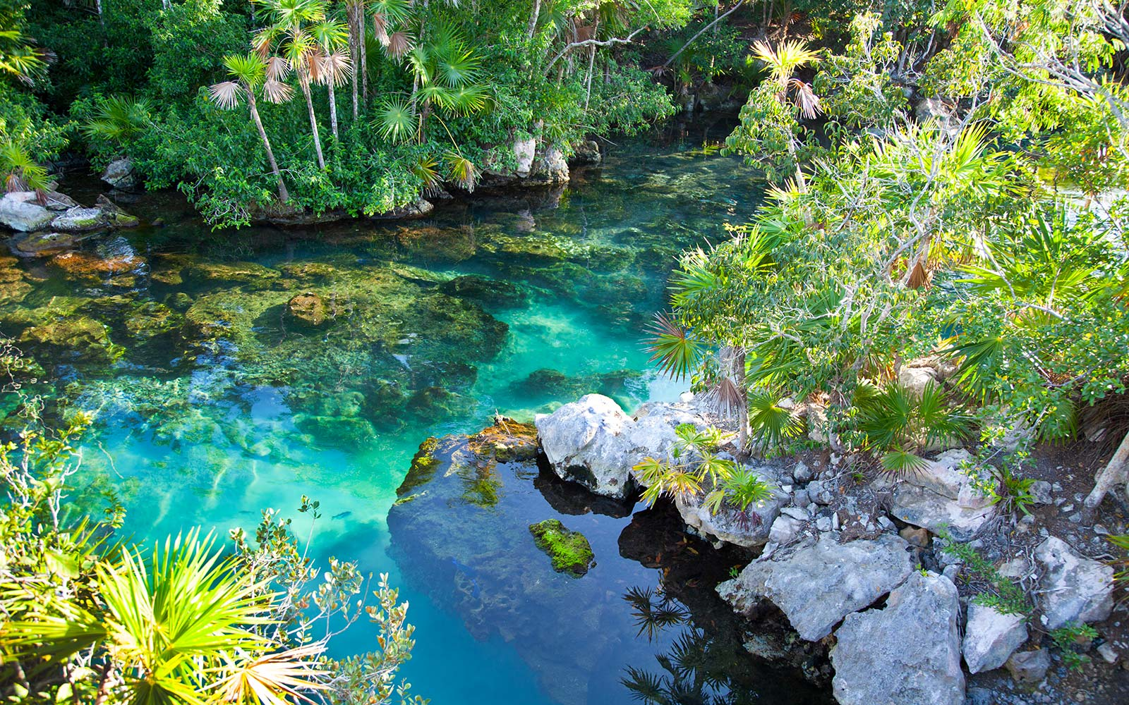 Cenote with beautiful turquoise water for snorkeling at Xel-Ha, Cancun Mexico rainforest Cara Delevingne Birthday