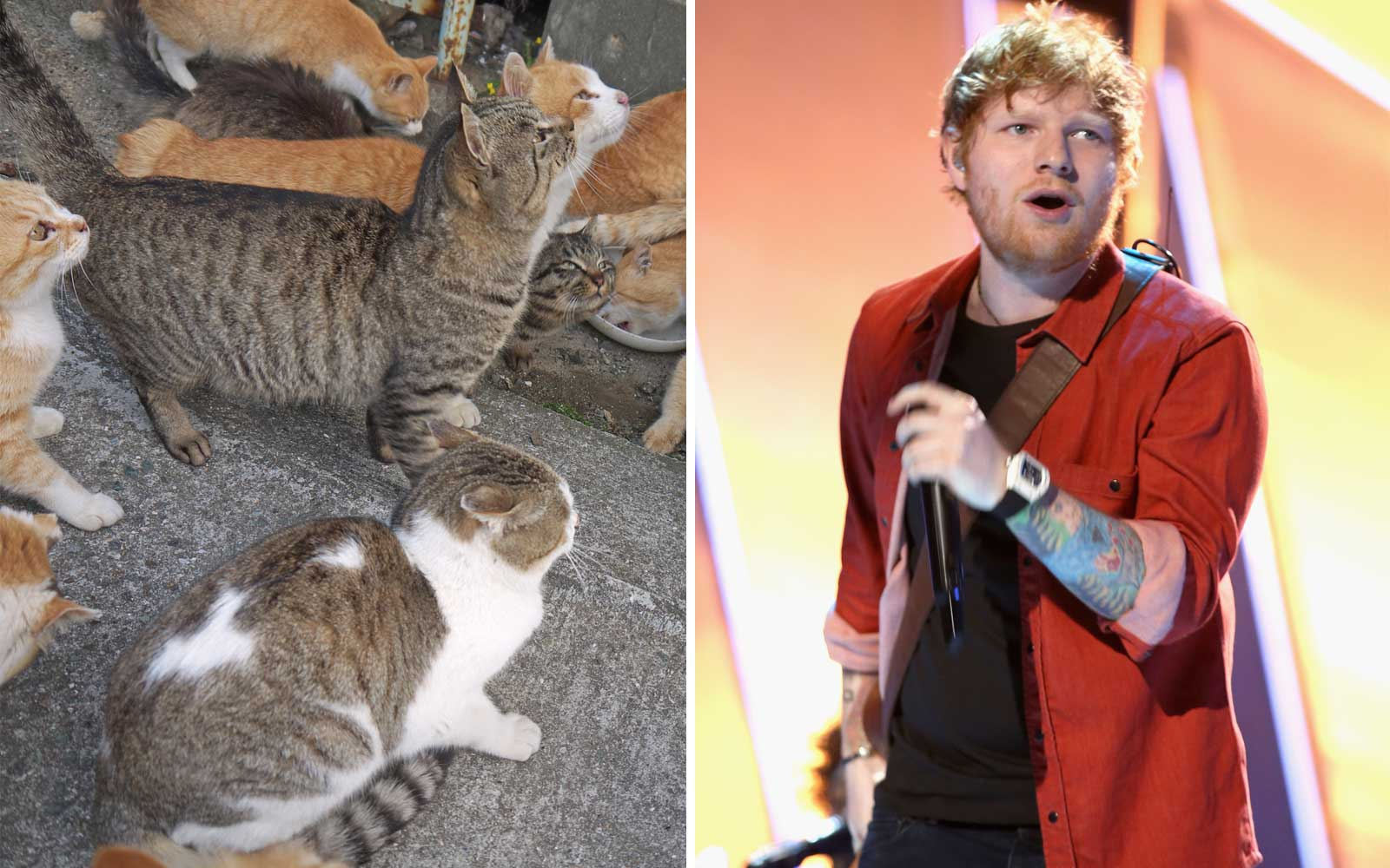 Ed Sheeran Asked to go to Cat Island