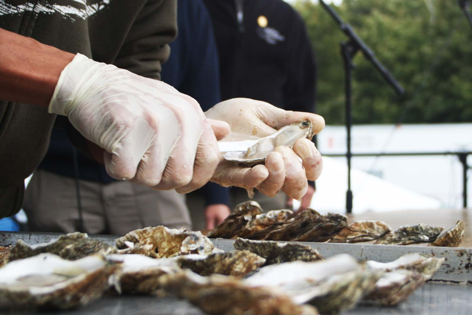 Wellfleet OysterFest in Massachusetts