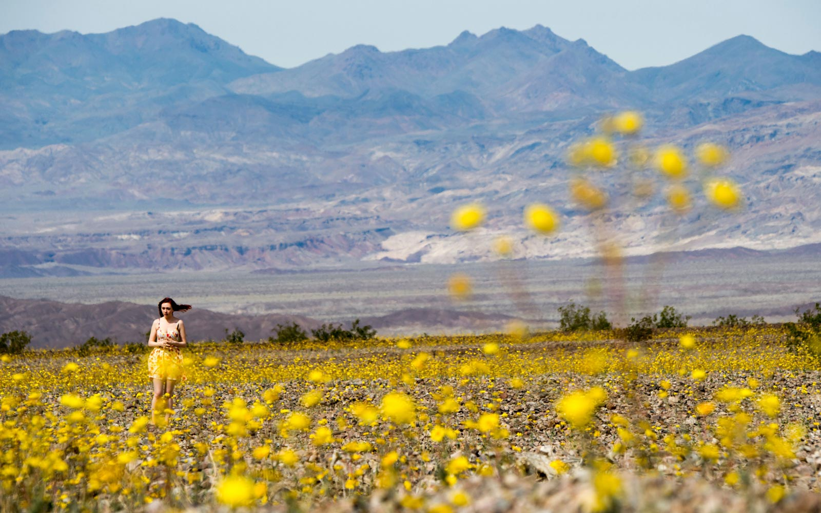 Superbloom, Southwest United States