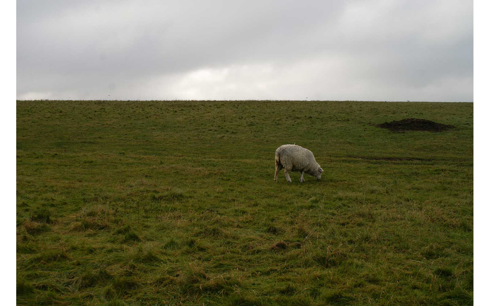 Sheep at Stonehenge
