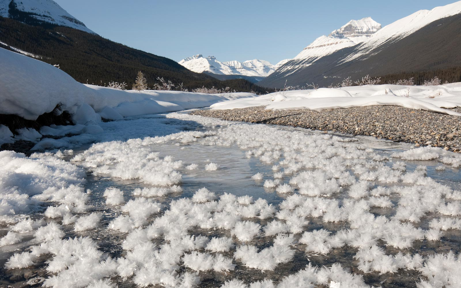 Frost Flowers, Graveyard flats, Canadian Rockies, Canada