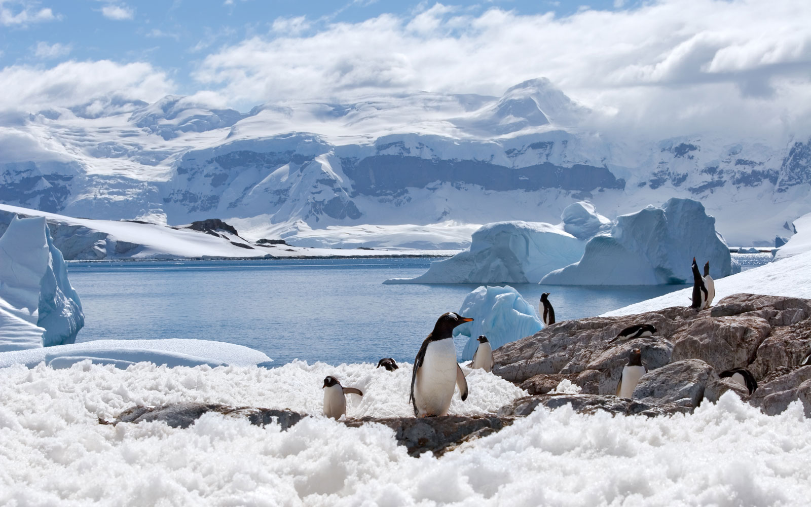 penguins in ice