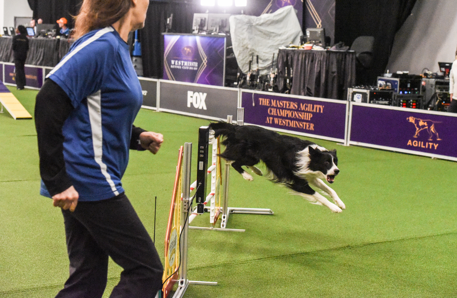 Border Collie competes in the Westminster Dog Show Agility Championship