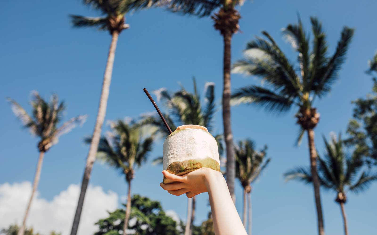 Coconut Milk and Palm Trees