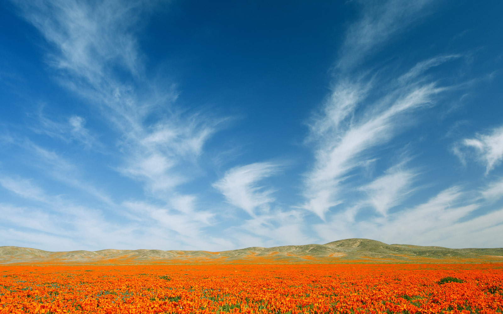 California Poppy Festival, Lancaster, California