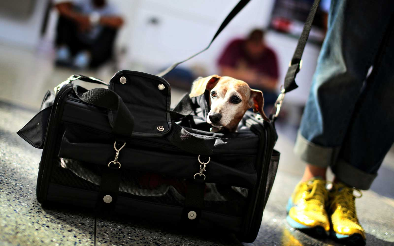 Dog in carry-on bag at airport