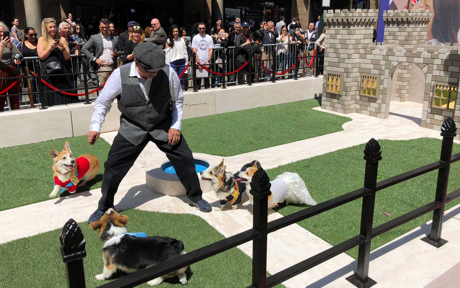 A trainer plays with the corgis in front of a palace playhouse.