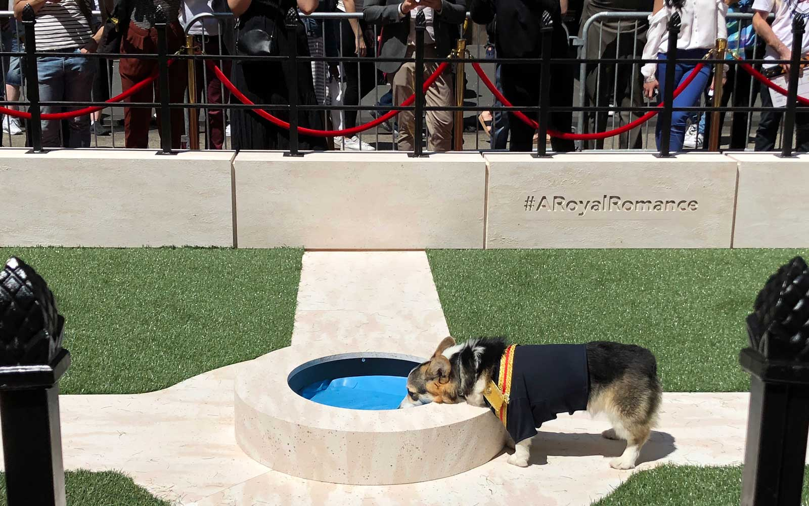 A thirsty Prince Harry laps at water from the fountain.