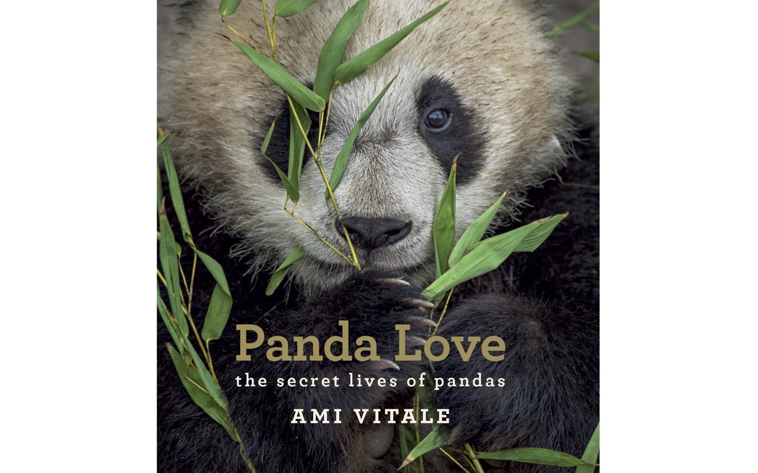 cover of the book Panda Love by Ami Vitale