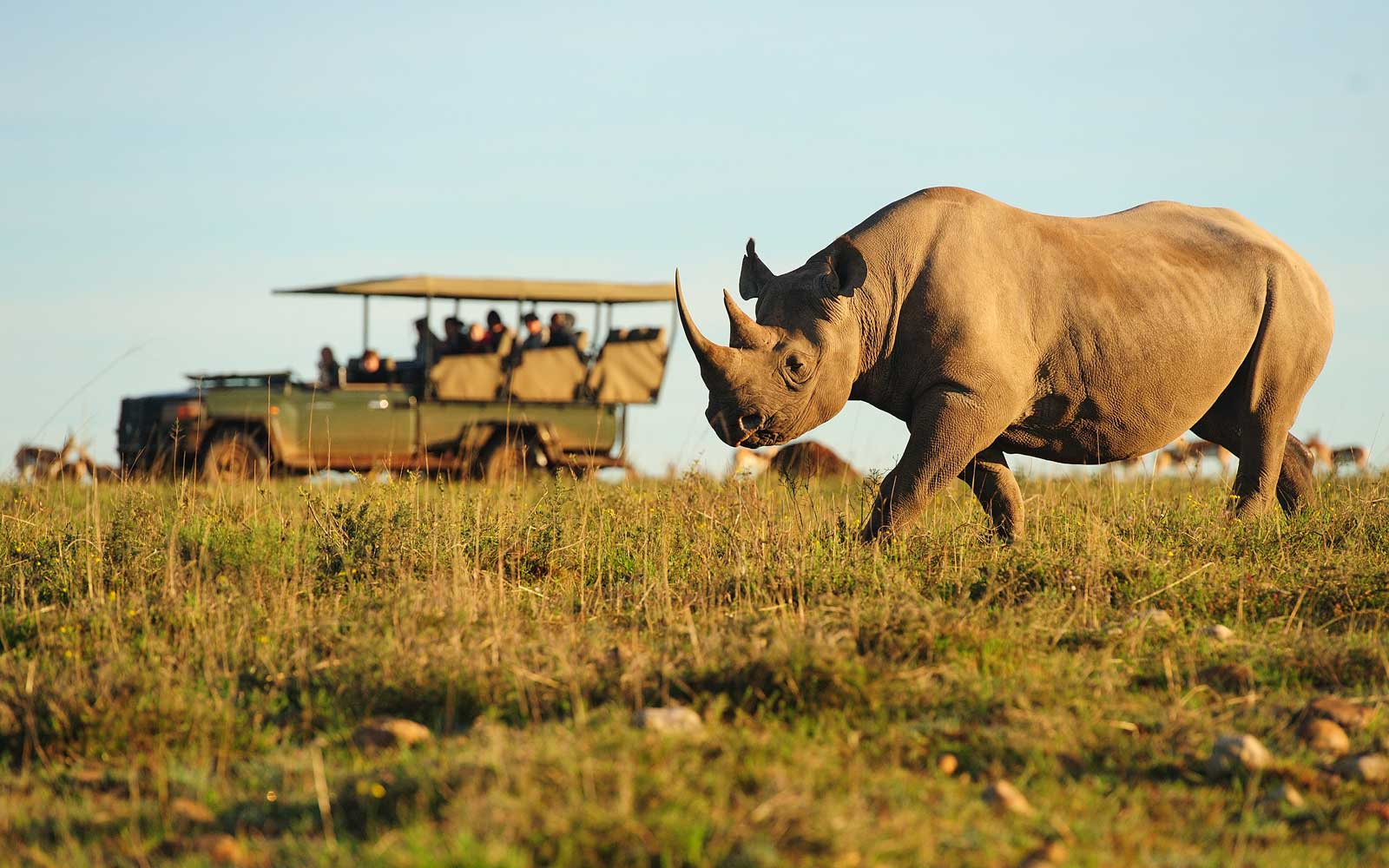 Rhino on a game drive with Lion World Travel