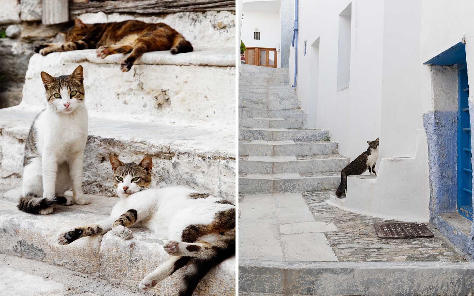 Cats on the island of Syros, in Greece