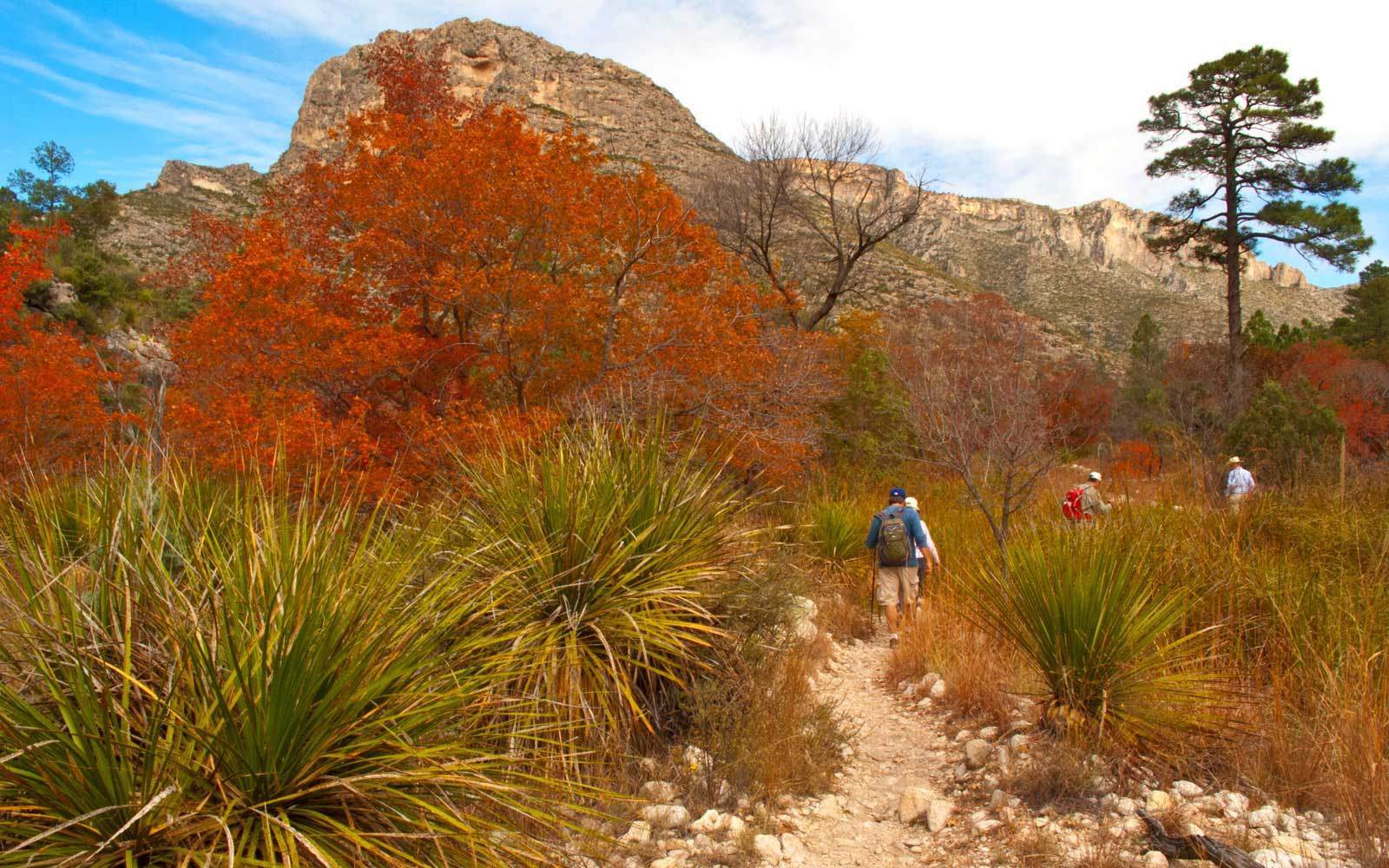 McKittrick Canyon Scenic Hiking Trail with autumn foliage, Guadalupe Mountain National Park, Texas, USA