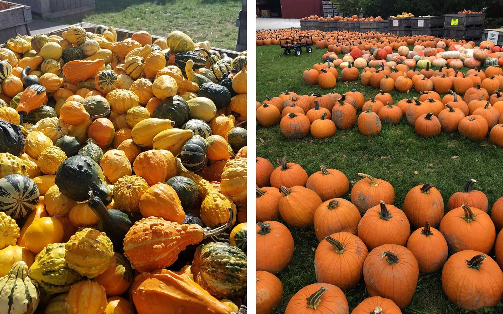 Anderson Orchard, Mooresville, IN