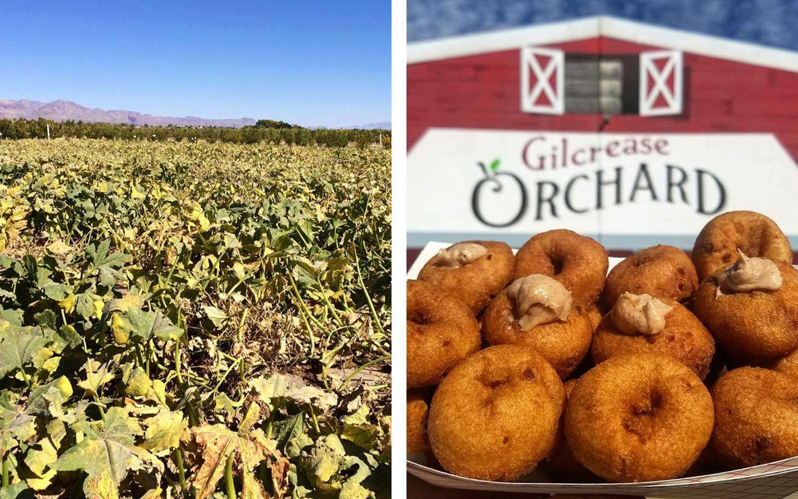 4. Gilcrease Orchard