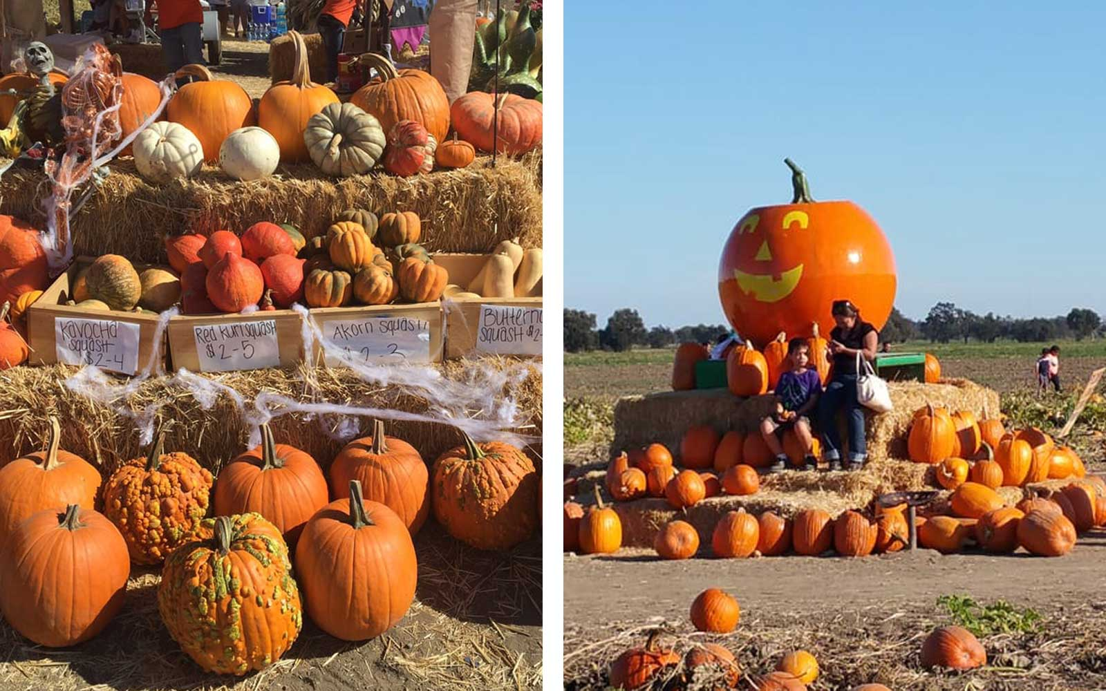Uncle Ray's Pumpkin Patch, Sacramento, California