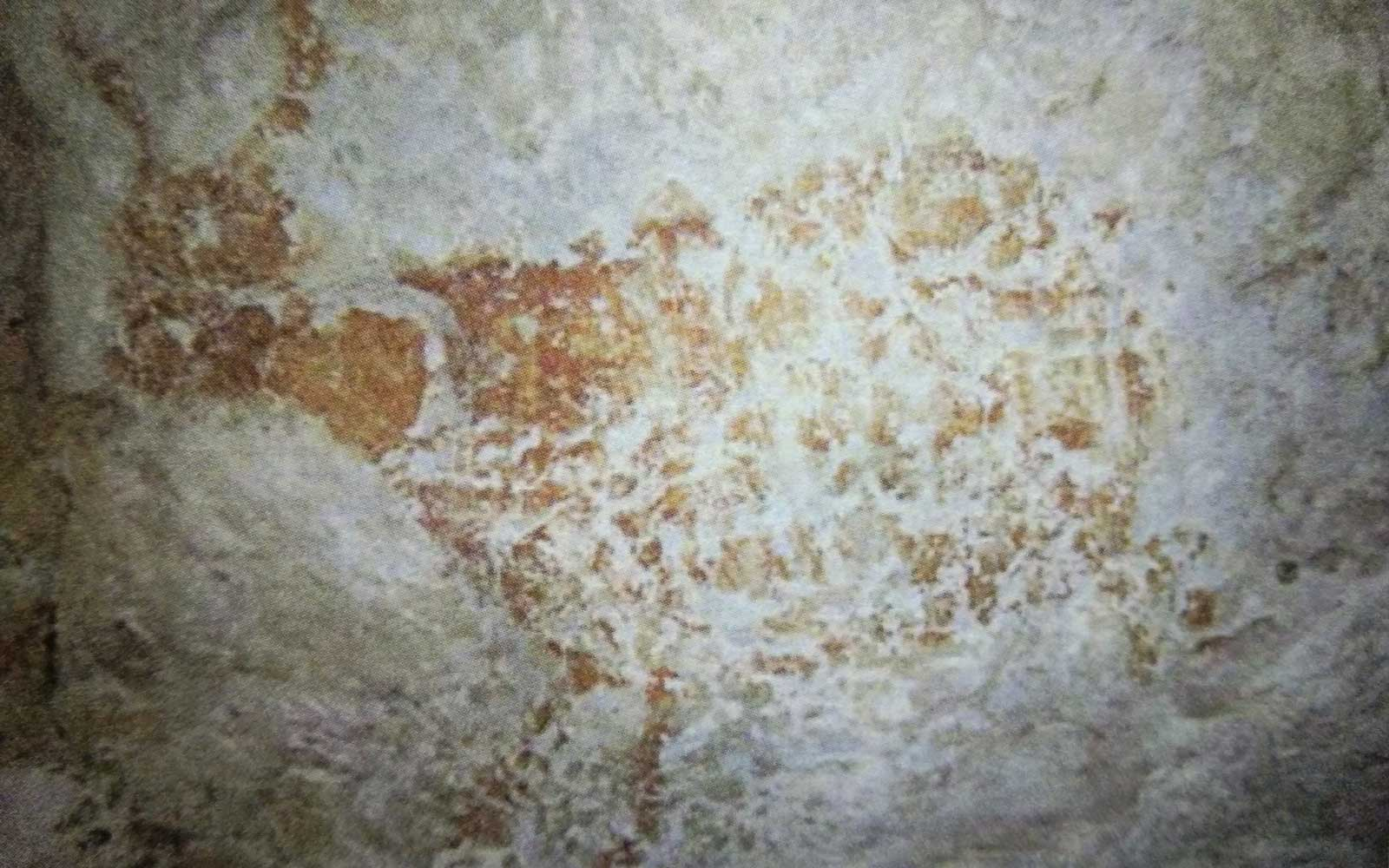 World's oldest rock art discovered in Borneo, Indonesia
