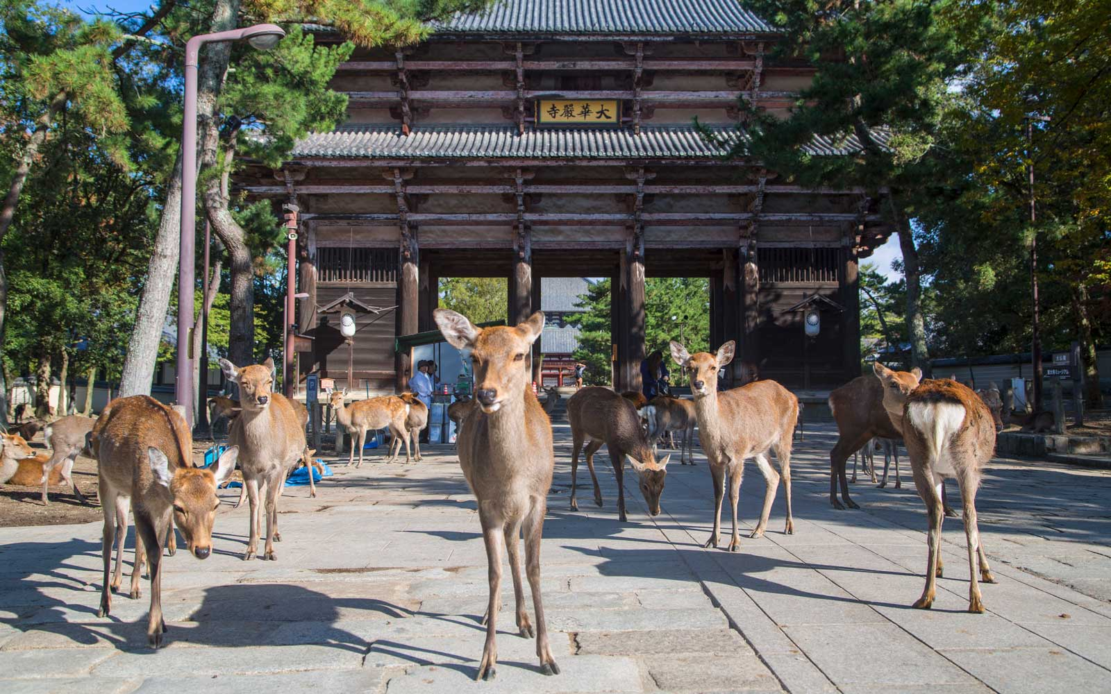 Deer outside Nandaimon Gate of Todaiji Temple (UNESCO World Heritage Site), Nara, Kansai, Japan