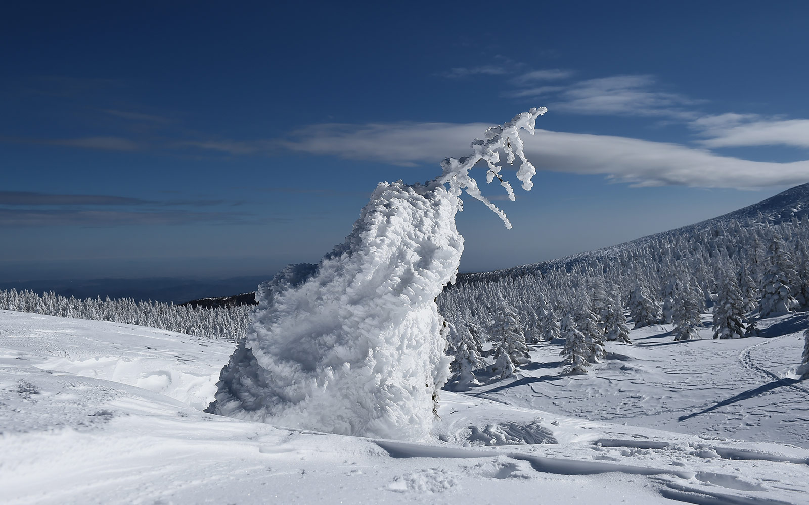 View of Snow Monster at Zao Ski Resort