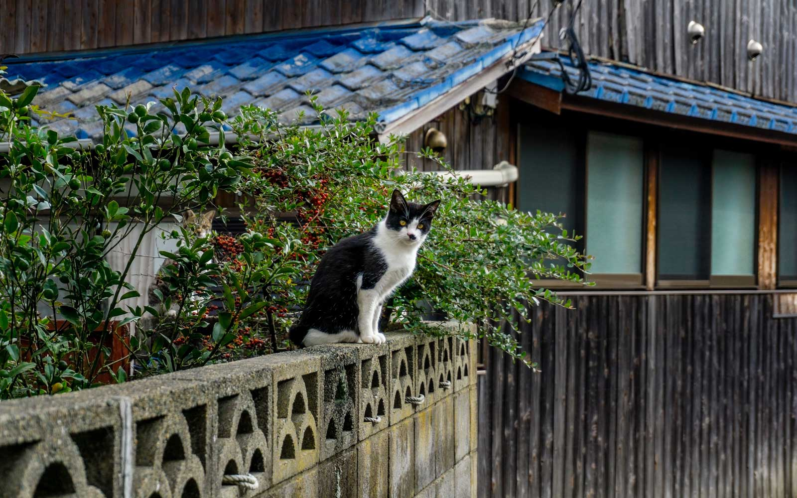 A cat on Japan's Ainoshima Island