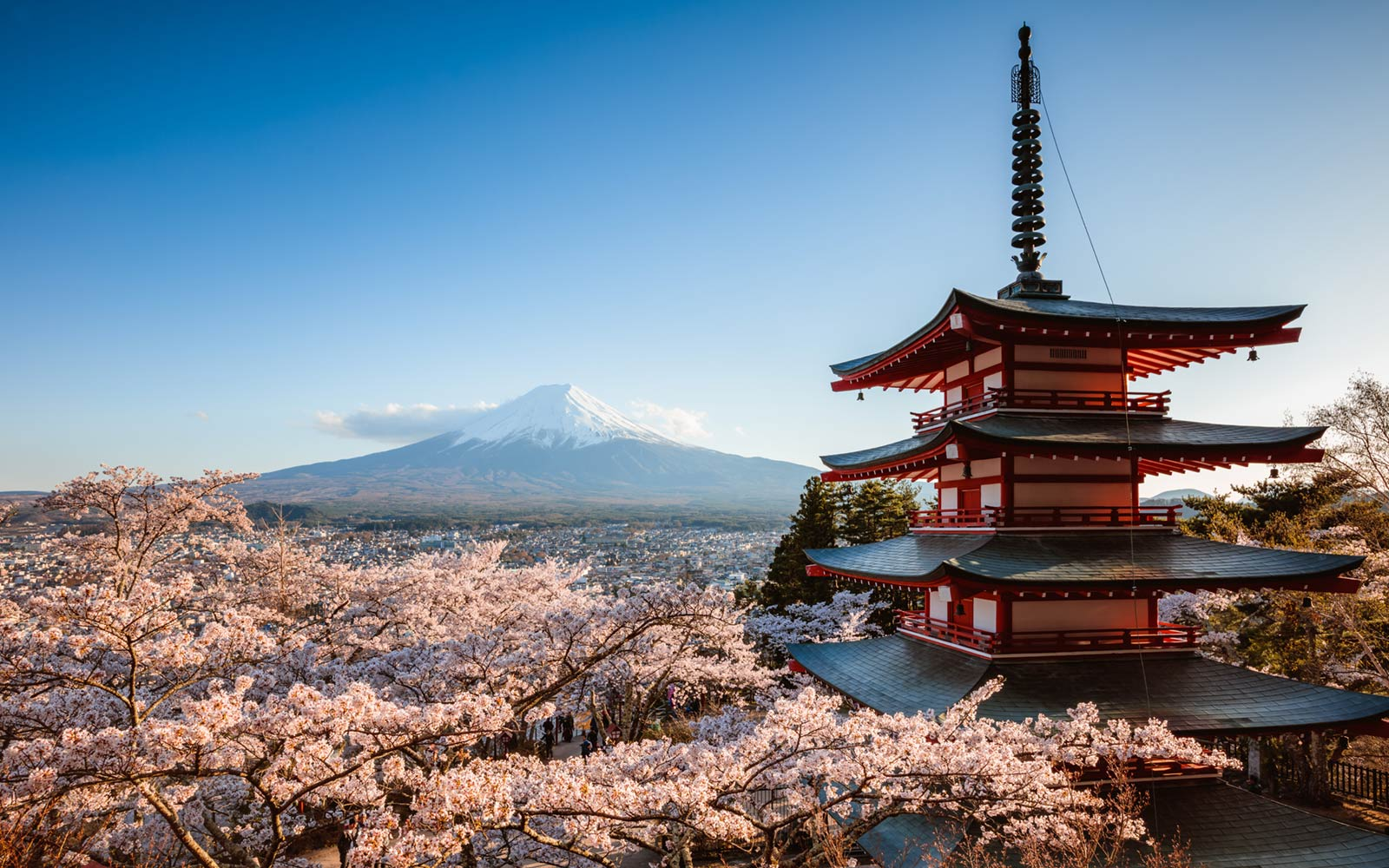 Cherry Blooms at Chureito Pagoda and Mt. Fuji in Japan