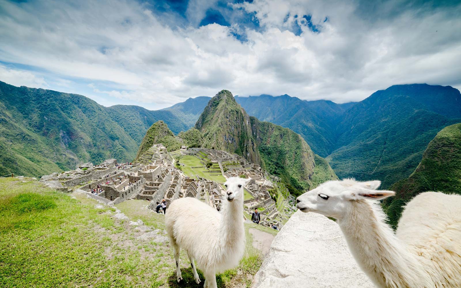 Llamas On Machu Picchu Against Sky