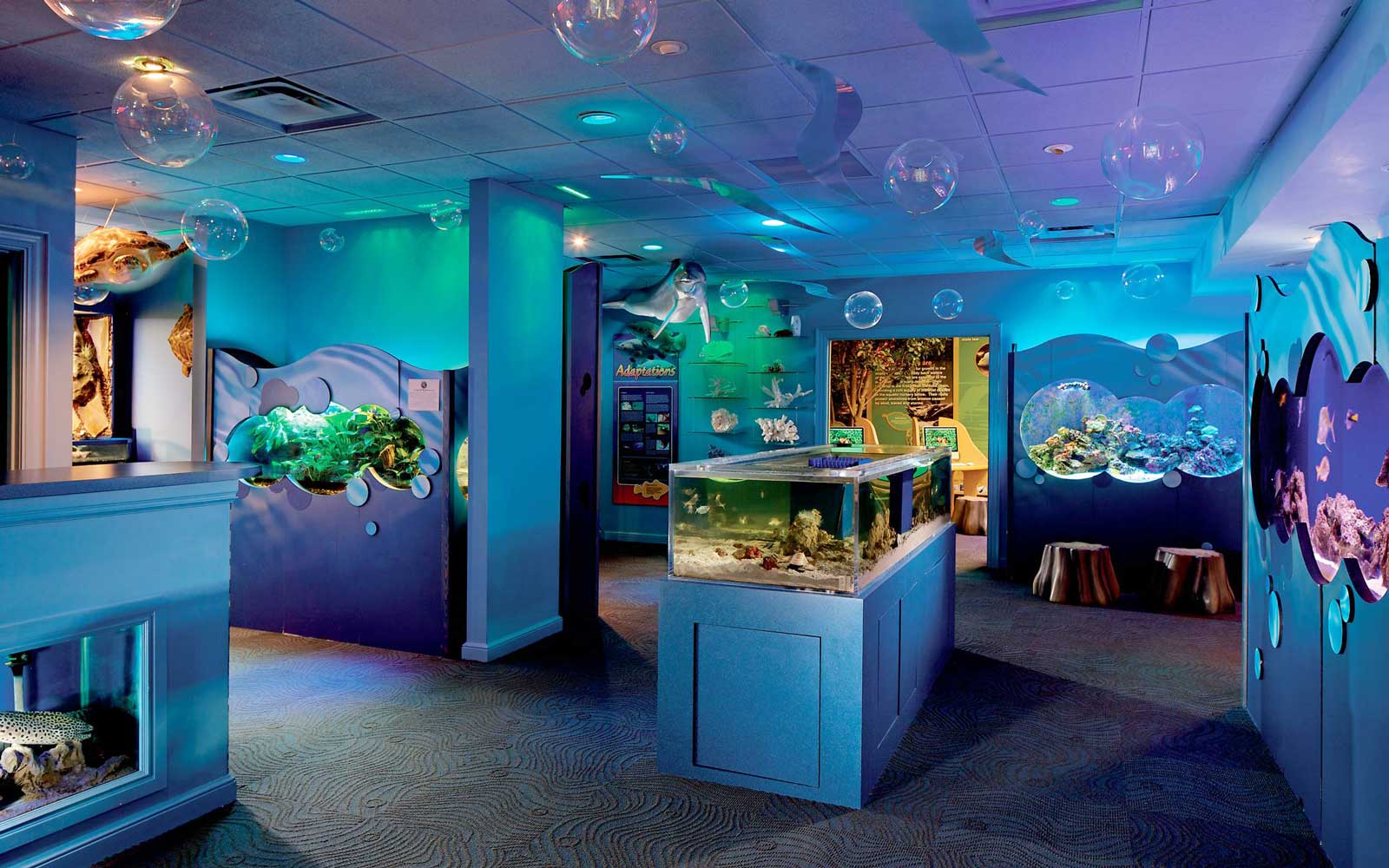 Discovery area at The Ritz-Carlton, Naples, Florida