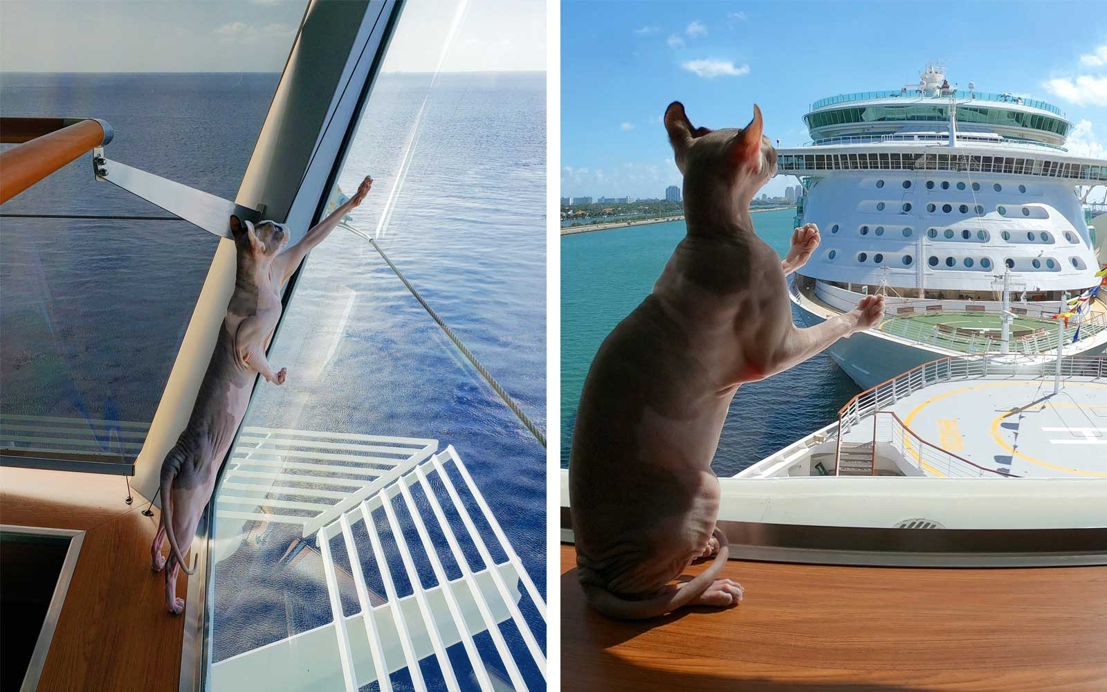 Captain Kate McHue and Bug, Celebrity Cruise Ship Cat