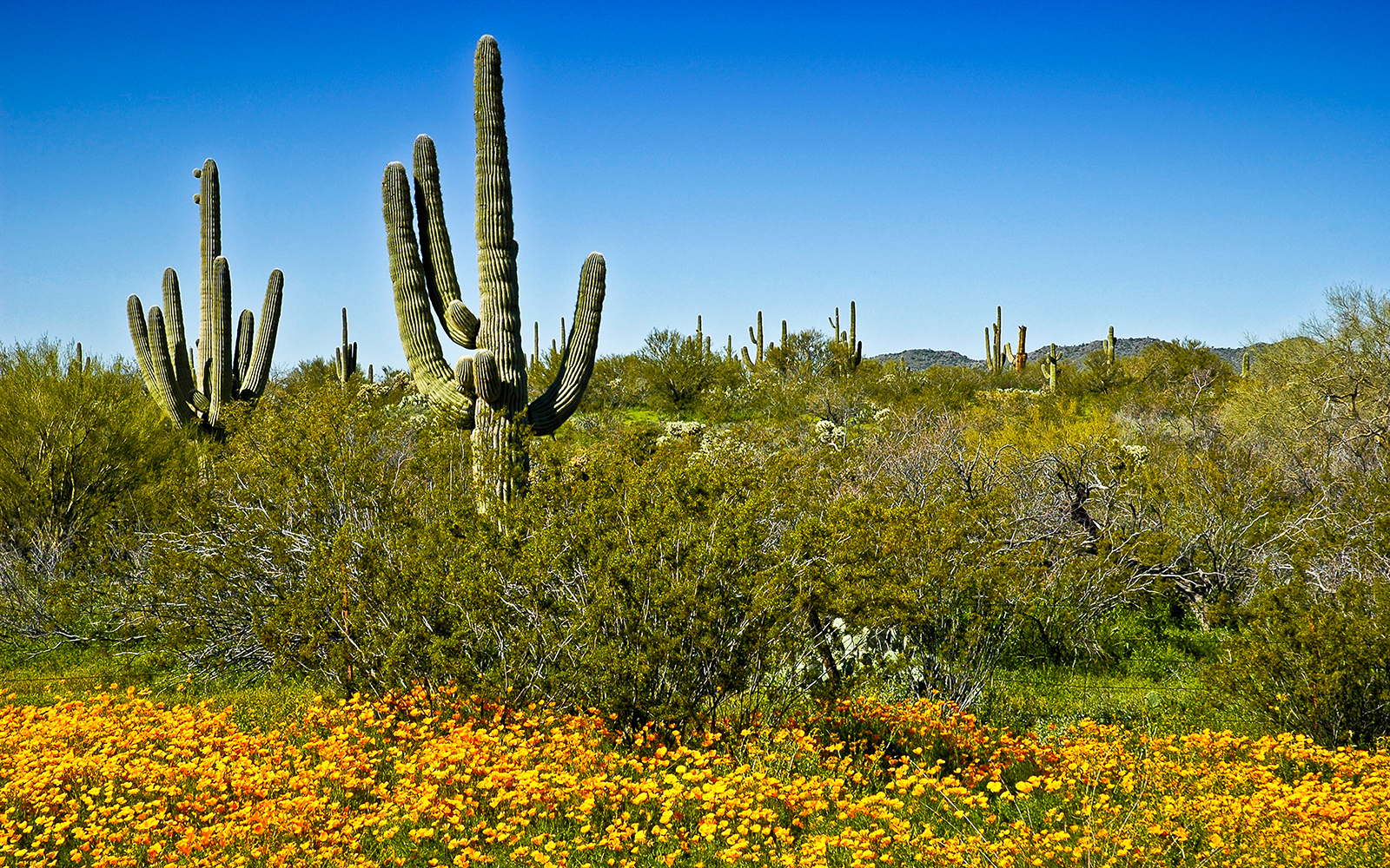 Arizona-Sonora Desert, Arizona