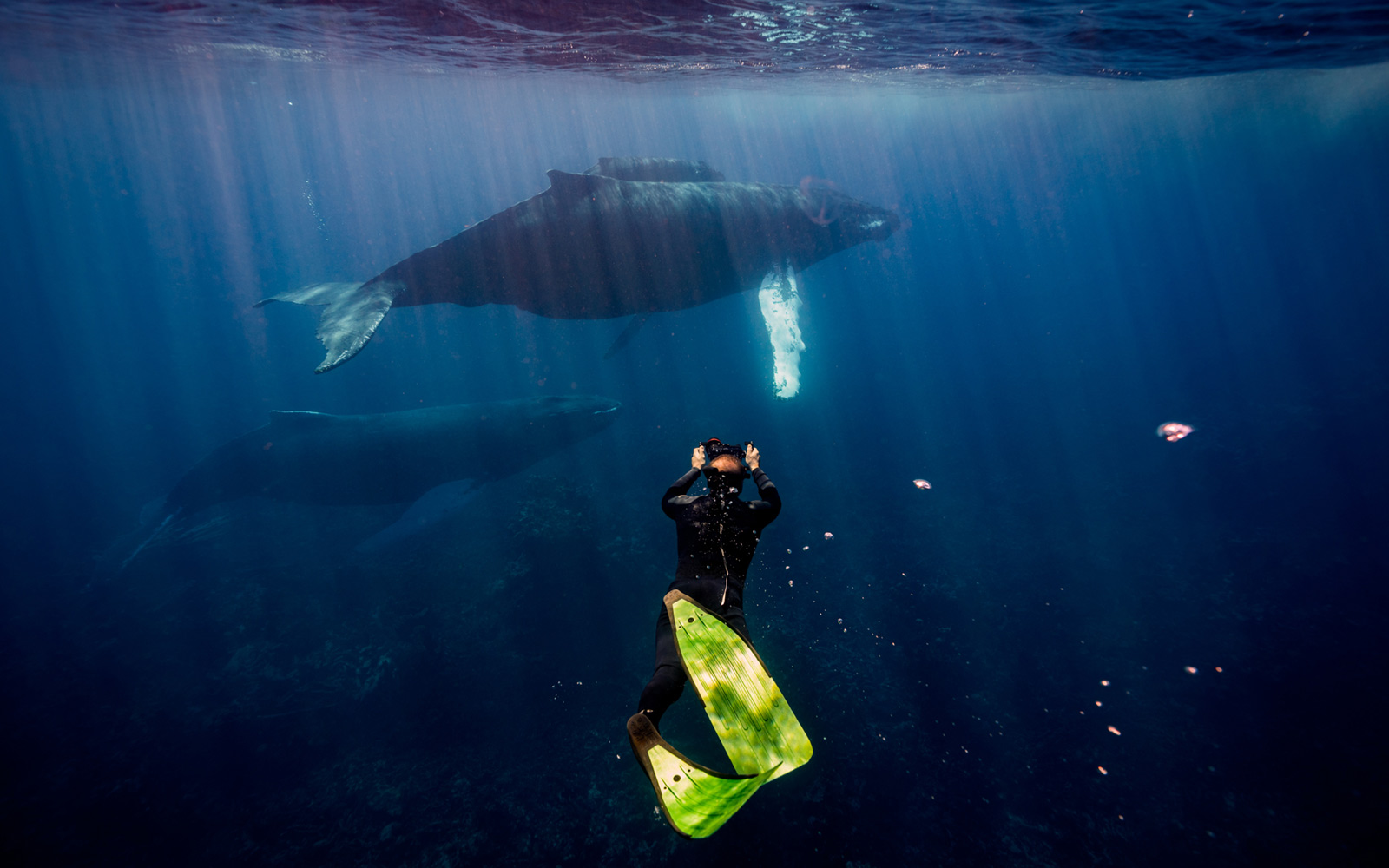 Swimming with Whales in the Dominican Republic