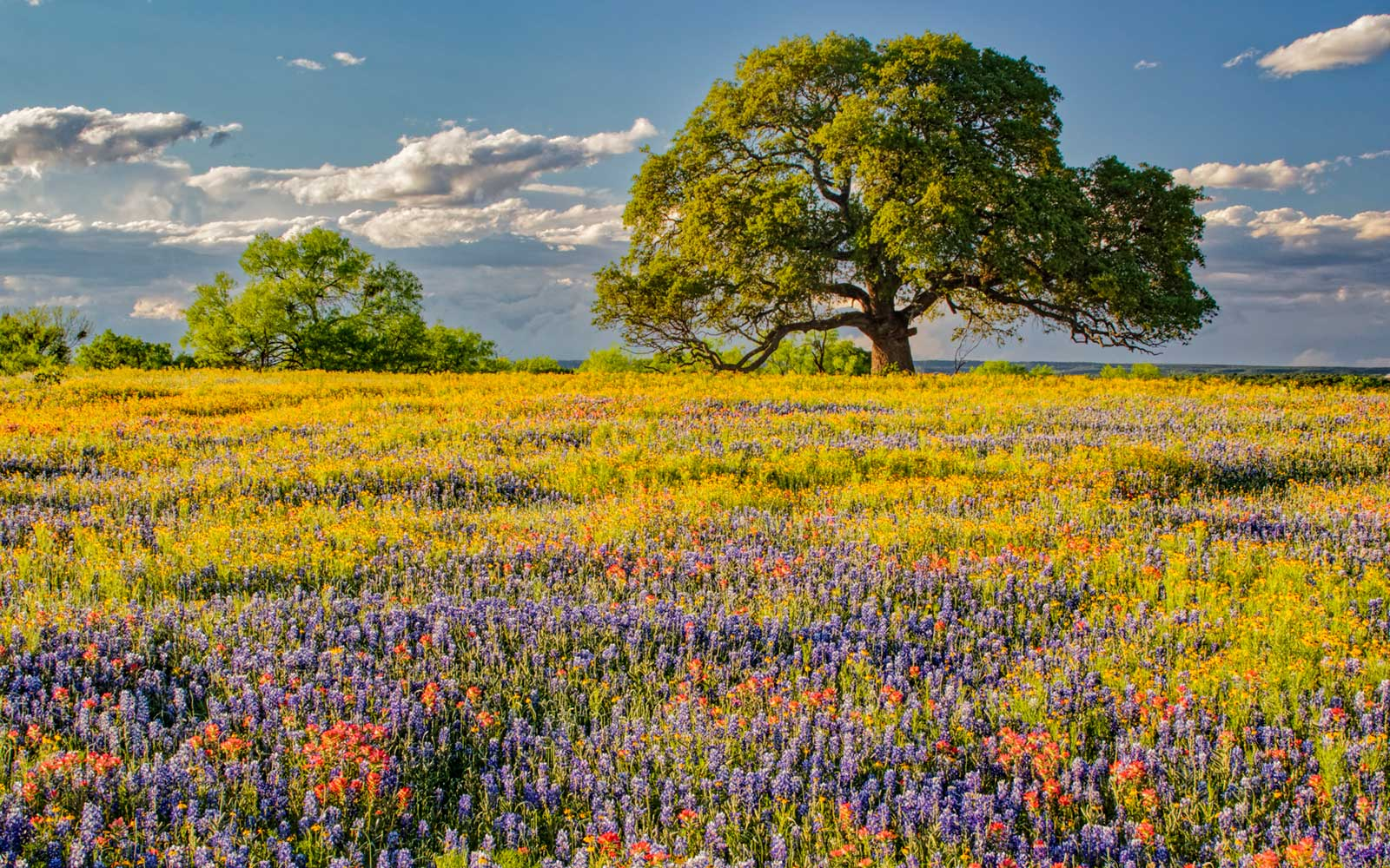 Texas Hill Country, Blue Bonnets and Indian Paintbrush Wildflowers, Spring