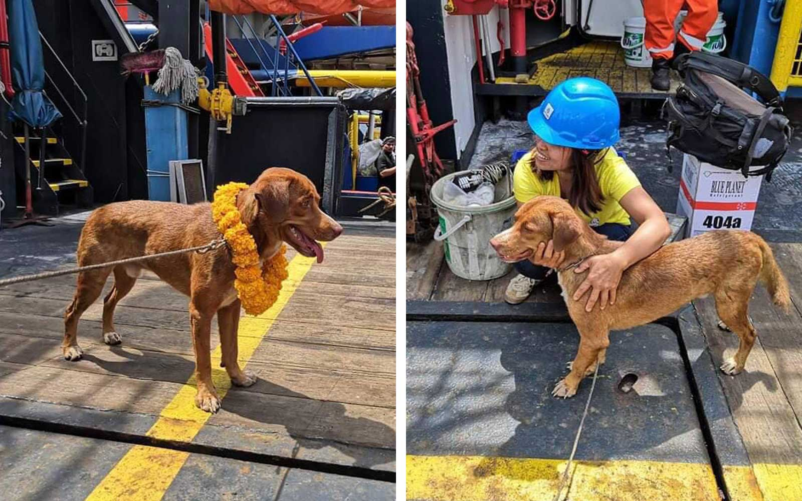 A dog rescued in the Gulf of Thailand by oil rig workers, At Sea - 17 Apr 2019