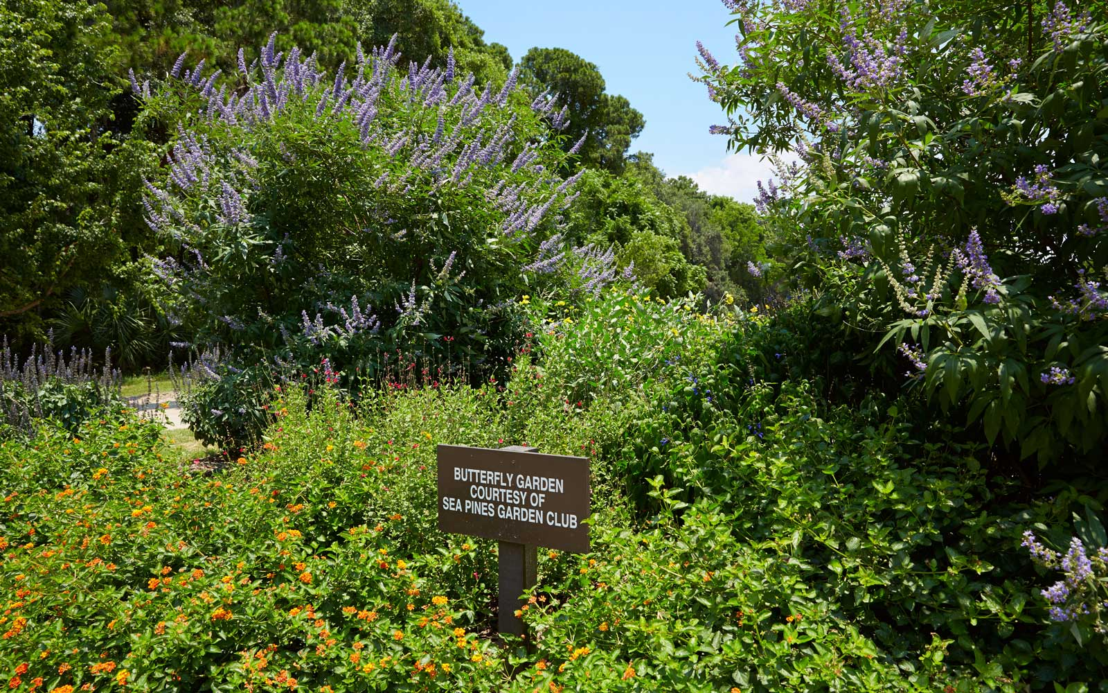 Butterfly Garden in Sea Pines Forest Preserve, Hilton Head, South Carolina.