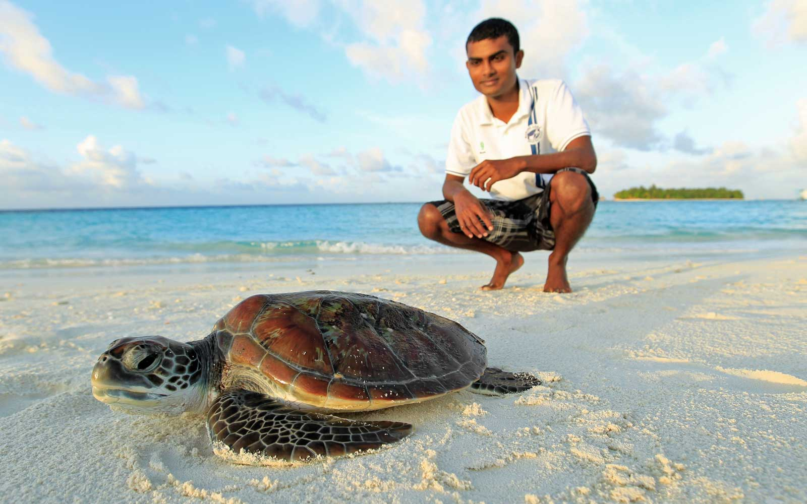 Turtle protection program at the Banyan Tree Vabbinfaru resort in the Maldives