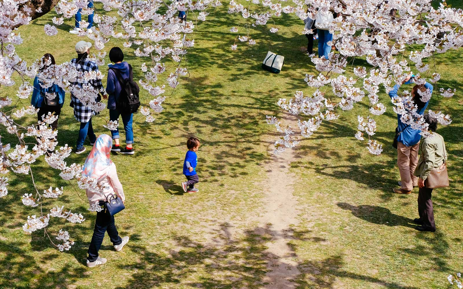 Cherry Blossoms in Hakodate, Japan