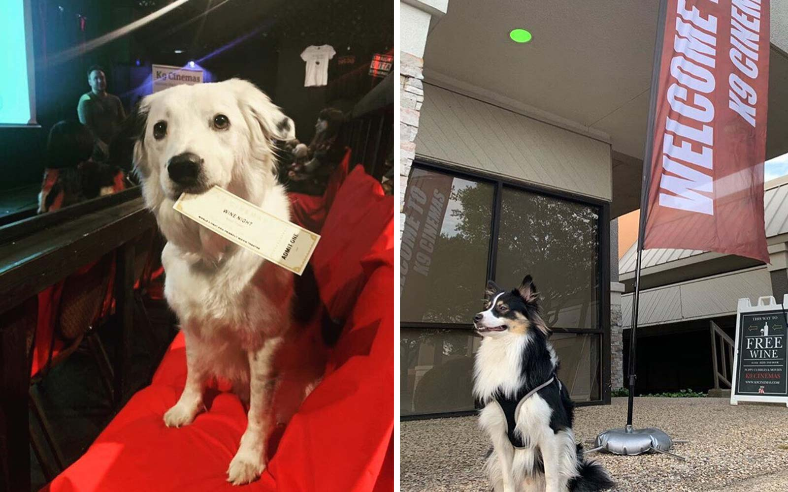 This Movie Theater Lets You Bring Your Dog — and Offers Bottomless Wine!