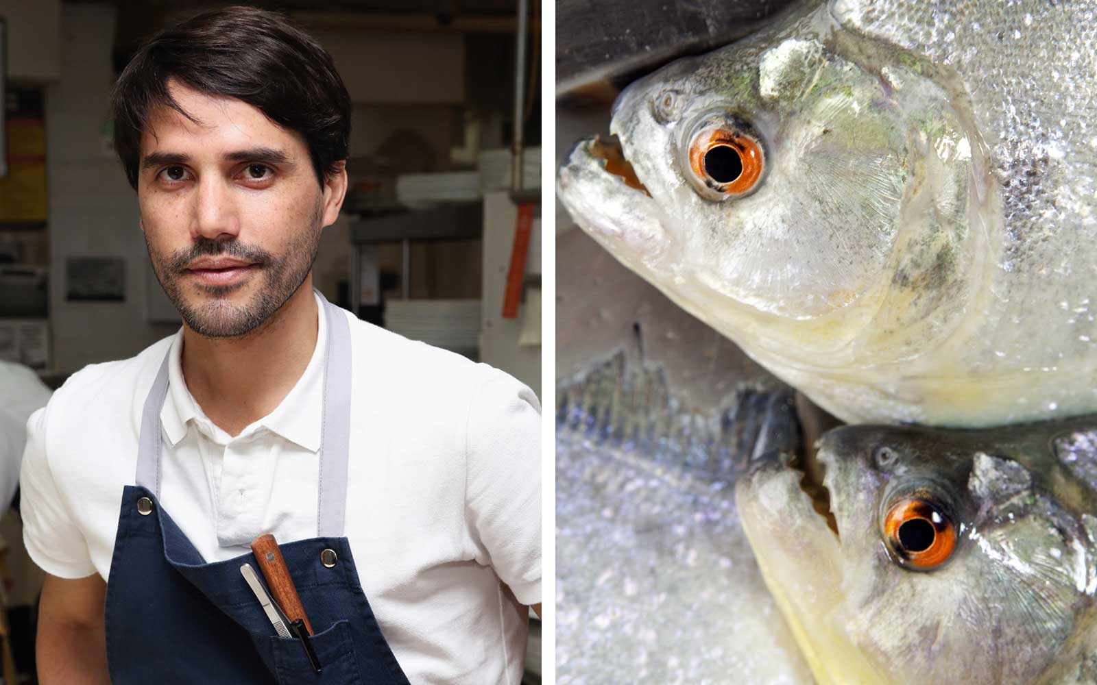 Chef Virgilio Martinez and Piranhas
