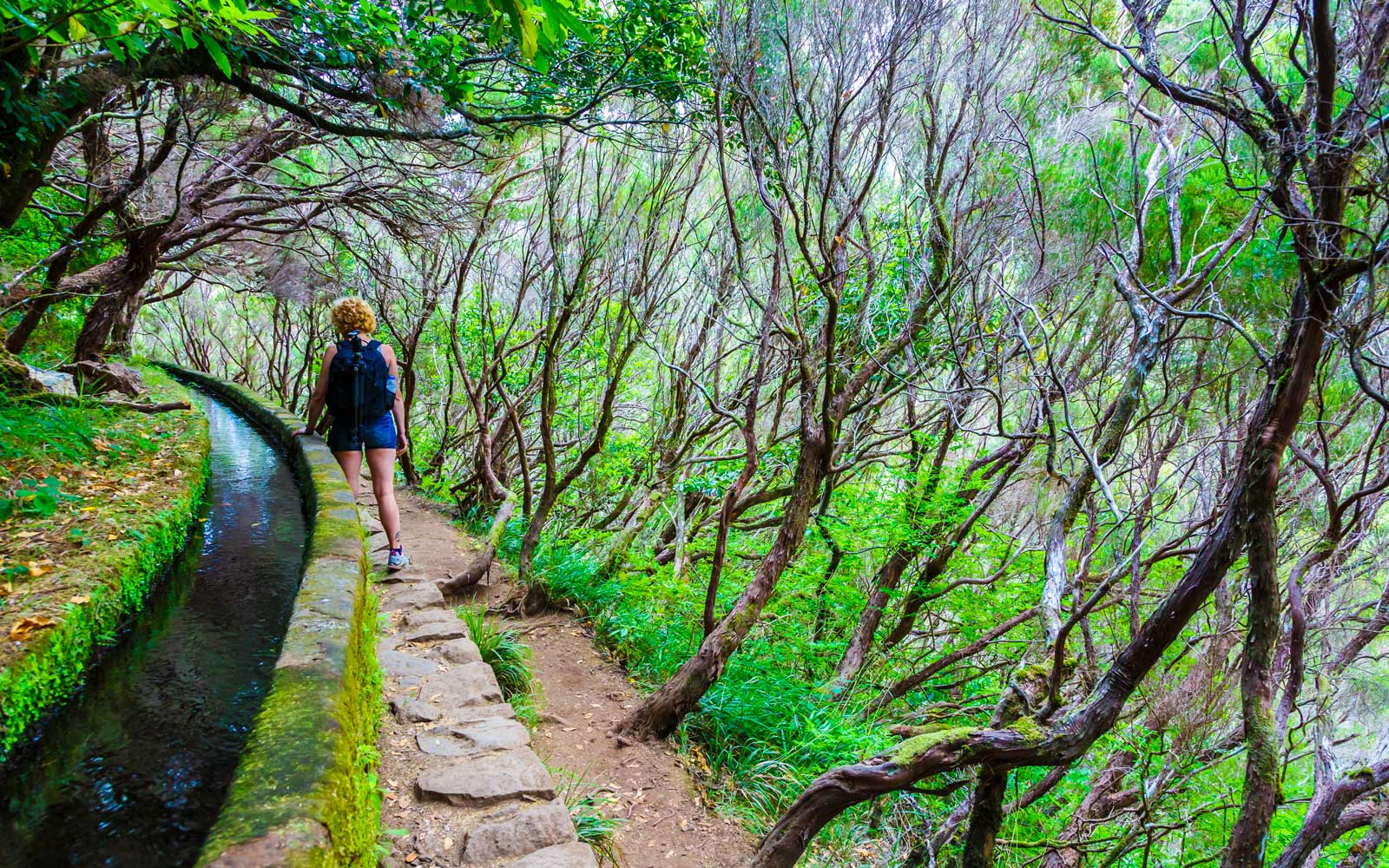 Woman hiking in a laurisilva forest on the Levada das 25 Fontes route in Madeira, Portugal